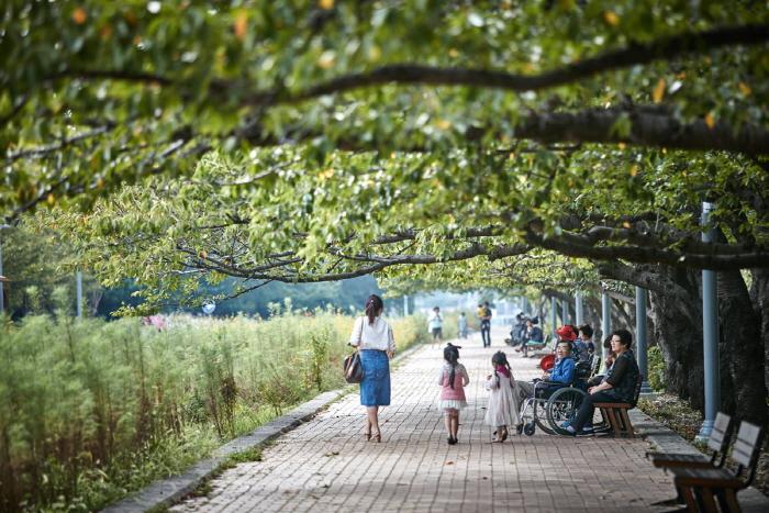 Дорога вишнёвых деревьев на станции Кёнхва (경화역 벚꽃길)15