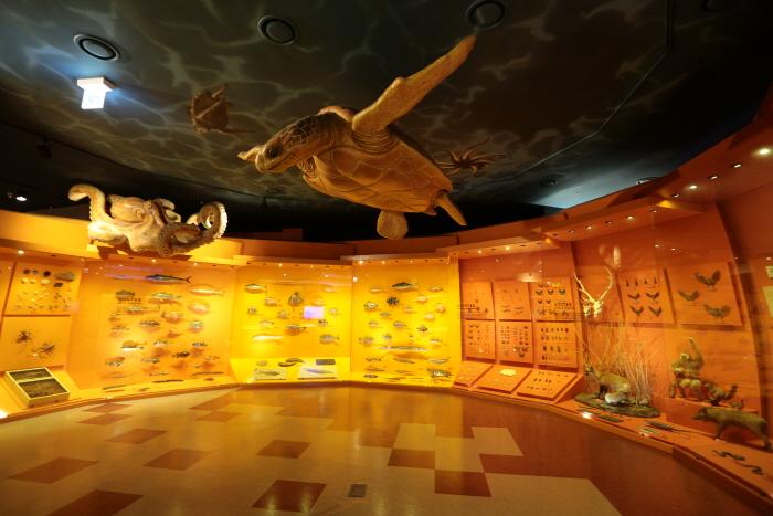 강화자연사박물관