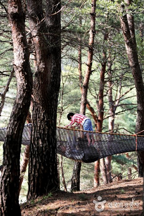 나무에 걸려있는 커다란 그물침대
