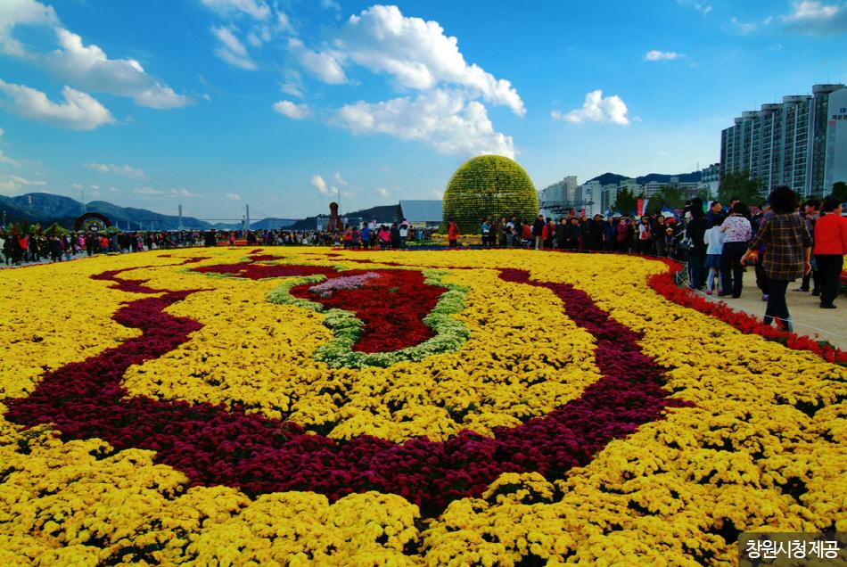 마산가고파국화축제장에 만개한 색색의 국화