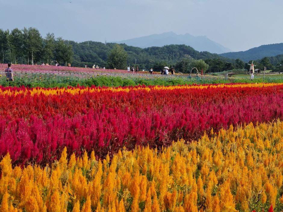 고석정 꽃밭