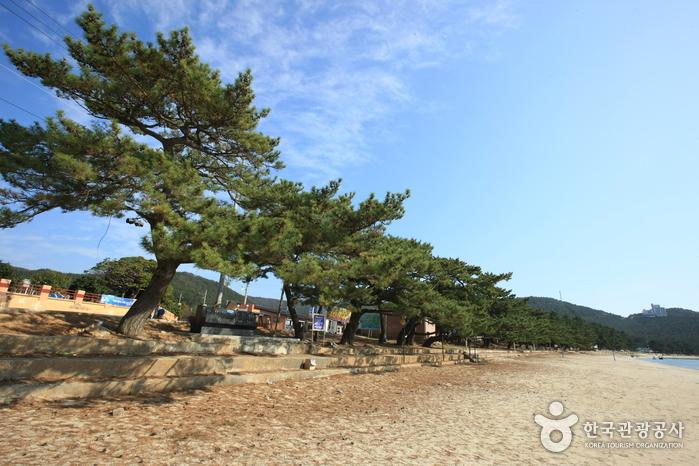 Пляж Сонхо (송호해수욕장)17