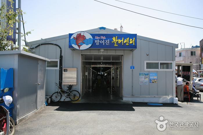 방어진 활어센터