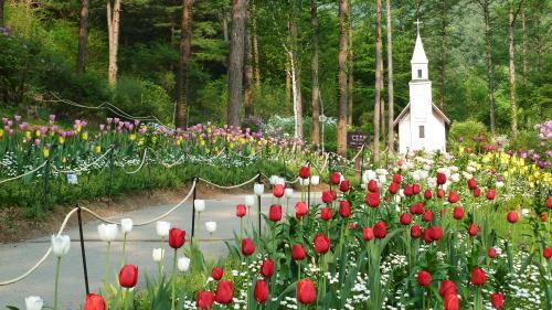 Весенний фестиваль в Дендрарии Утренней свежести (아침고요수목원 봄나들이 봄꽃축제)5