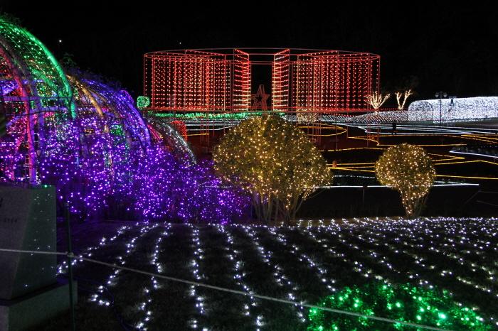 울산대공원 장미원 빛축제 2017  사진