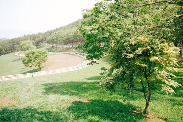 남해양떼목장 (상상양떼목장,편백숲)