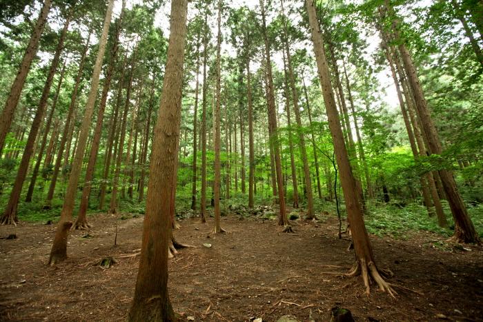 국립장성숲체원