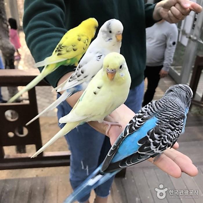 Парк птиц в Кёнчжу (경주 버드파크)