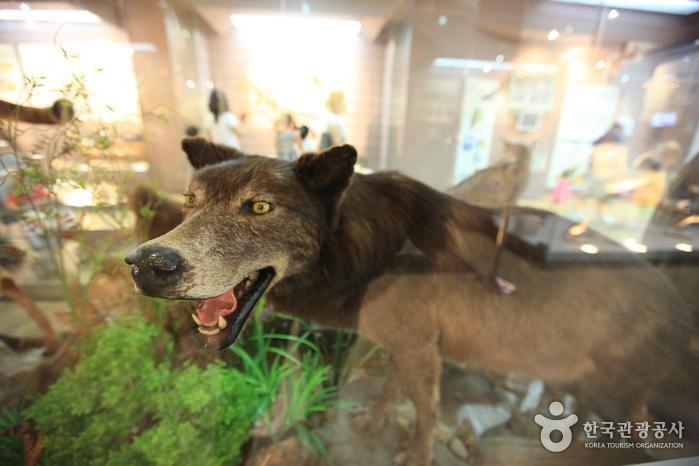 Музей естествознания Мокпо (목포자연사박물관)22