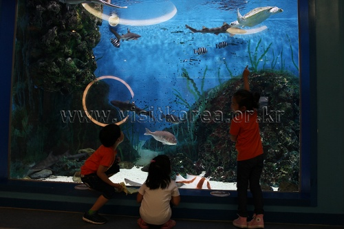 Wal-Erlebniszentrum Jangsaengpo (장생포 고래생태체험관)