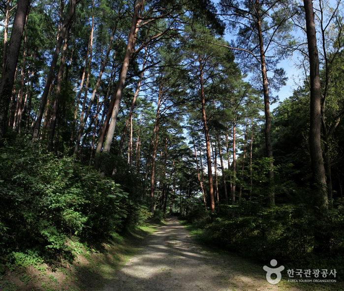 Samcheok Jungyeongmyo Grave (삼척 준경묘)
