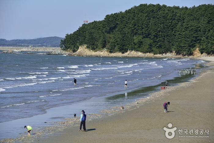 Strand Chunjangdae (춘장대해수욕장)