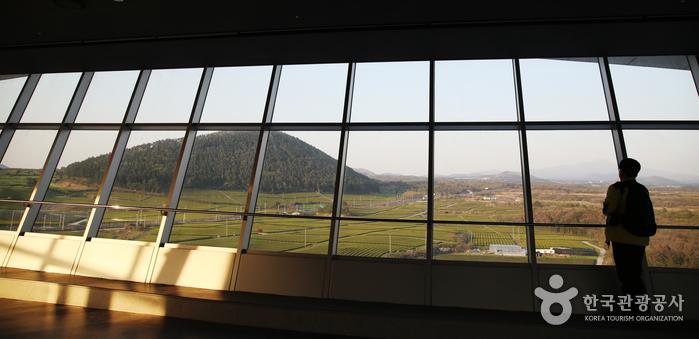 광대한 차밭과 한라산이 한눈에 잡히는 전망대 풍경