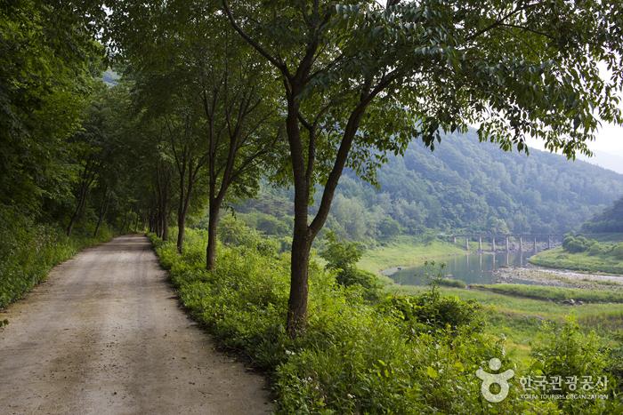 Okjeongho Lake Gujeolcho Theme Park (옥정호 구절초테마공원)