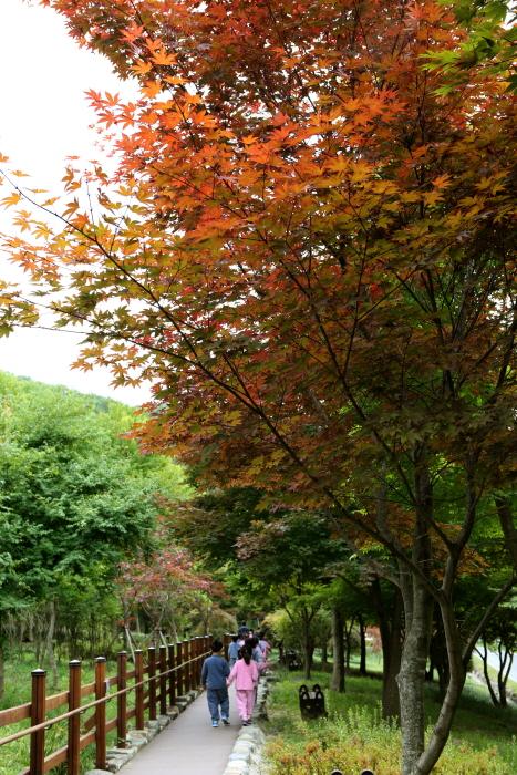 미동산수목원의 단풍나무길