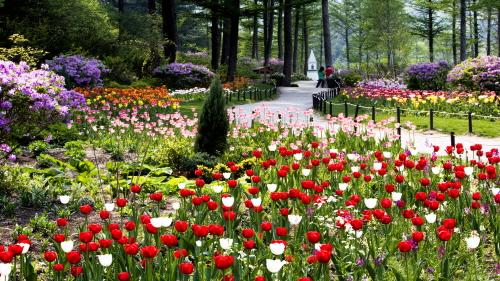 Весенний фестиваль в Дендрарии Утренней свежести (아침고요수목원 봄나들이 봄꽃축제)4