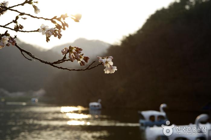 해질녘 저수지 풍경에 벚꽃이 어우러져 또 다른 감흥을 자아낸다.
