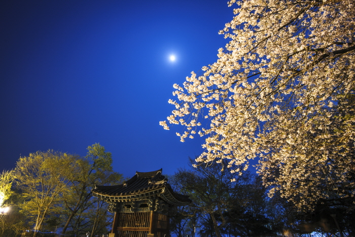 全州文化財夜行(전주 문화재야행)