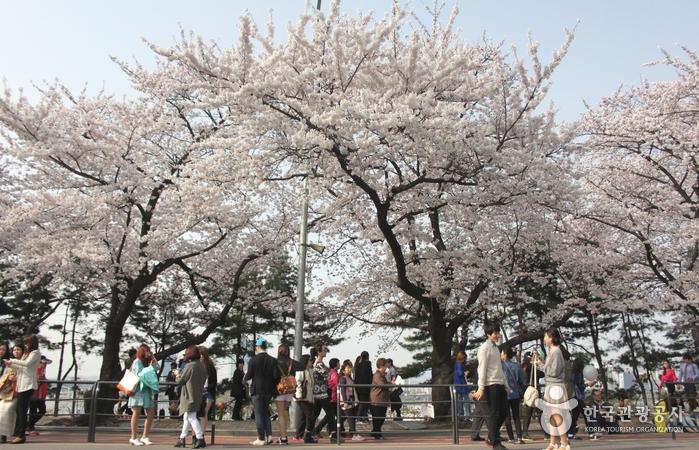 Yeouido Park (여의도 공원...