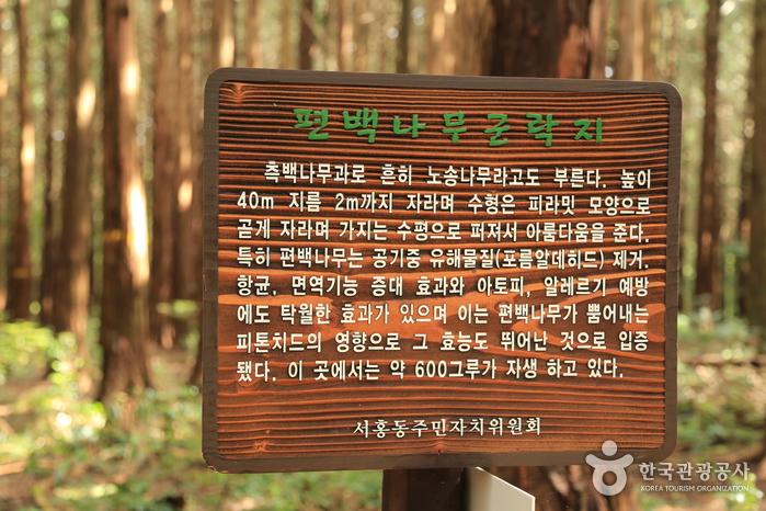 편백나무 숲 표지판