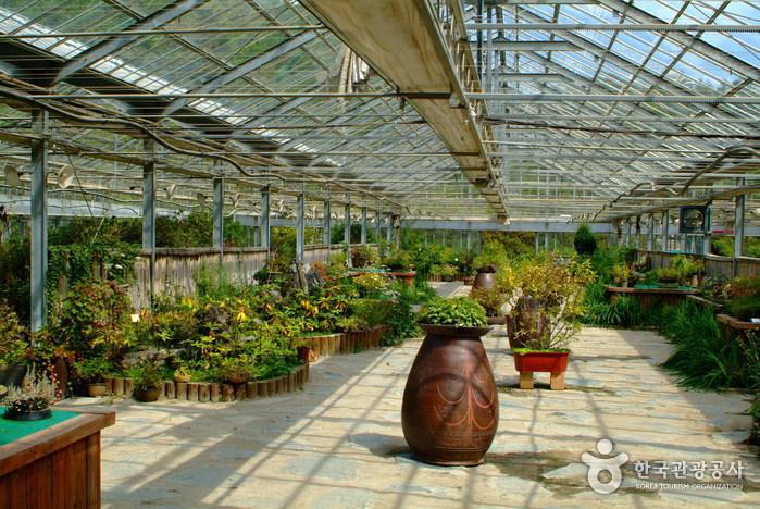 Botanischer Garten für Koreanische Pflanzen (한국자생식물원)
