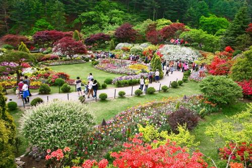 Весенний фестиваль в Дендрарии Утренней свежести (아침고요수목원 봄나들이 봄꽃축제)3