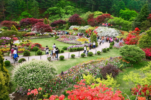 Spring Festival of The Garden of Morning Calm (아침고요수목원 봄나들이 봄꽃축제)