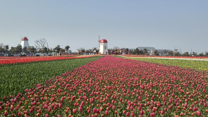Shinan Tulpenfestival (신안 튤립축제)