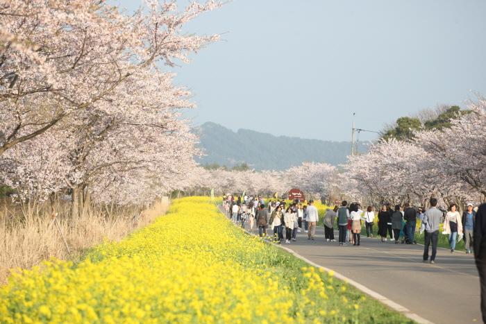 济州油菜花节(제주 유채꽃축제)