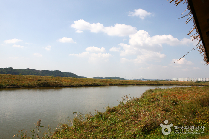 Sihwaho Lake Reed Marsh Park (시화호 갈대습지공원)
