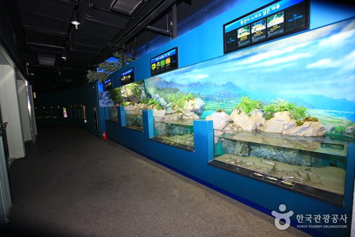 민물고기생태체험관 사진15