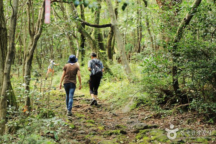 가족이 함께 걸어도 좋은 숲길