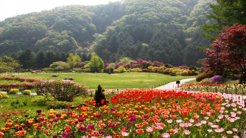 Весенний фестиваль в Дендрарии Утренней свежести (아침고요수목원 봄나들이 봄꽃축제)