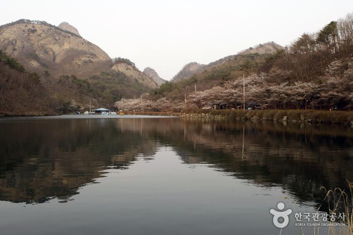 수변에 어리는 마이산의 반영은 봄날의 진경이다.
