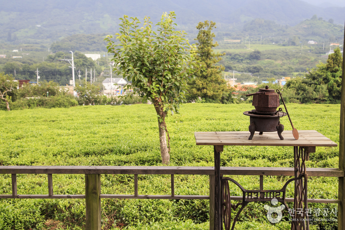 梅岩茶文化博物館(매암차문화박물관)