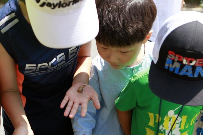 청원연꽃마을에서 달팽이를 보고 신기해하는 아이들