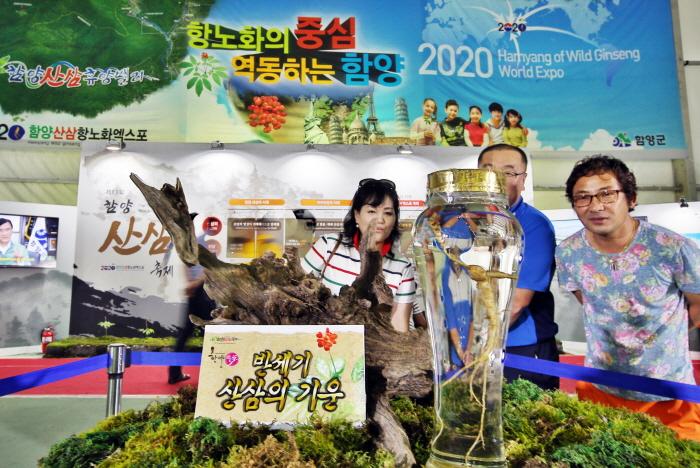 Festival des wilden Ginsengs Hamyang (함양 산삼축제)