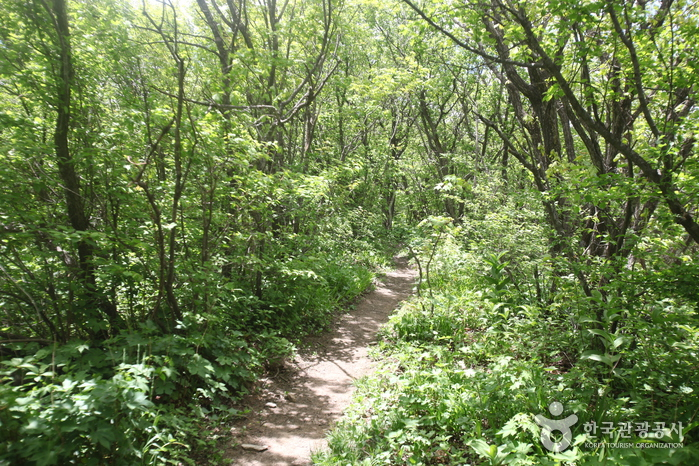 Nationalpark Odaesan (오대산국립공원)
