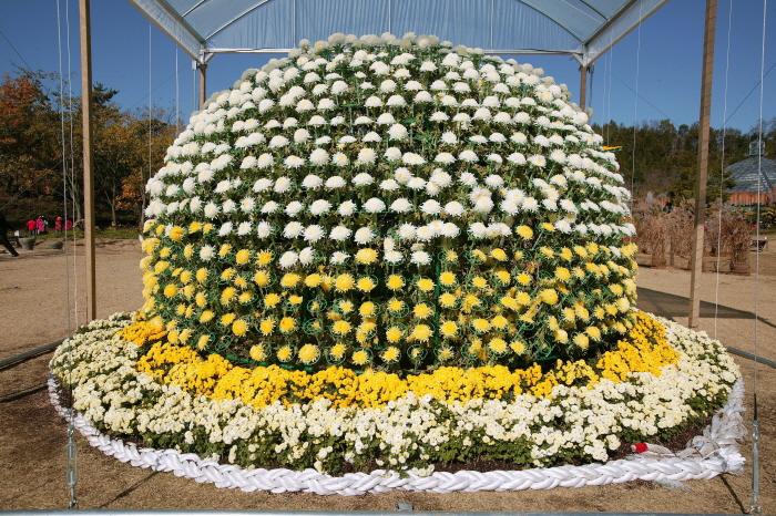 Большой фестиваль хризантем в Хампхёне (대한민국 국향대전 - 함평 국화축제 )