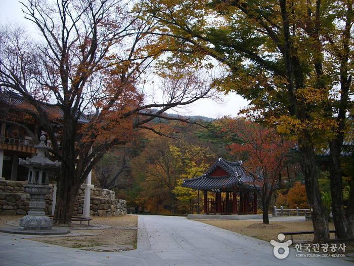 Donghwasa Temple (Daegu) (동화사(대구))