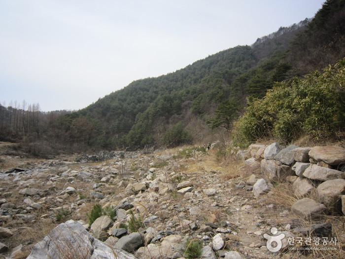 왕피천생태탐방로 사진14