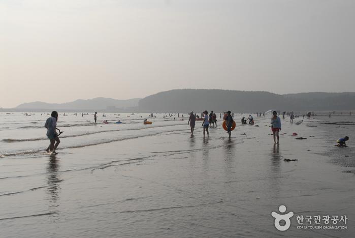 Strand Mongsanpo (몽산포해수욕장)
