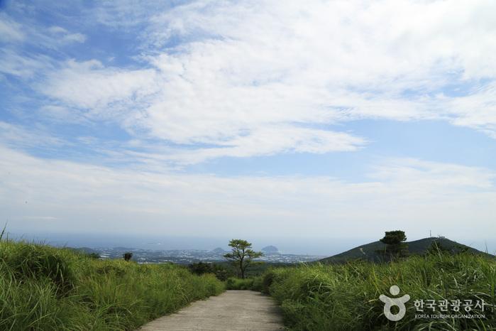 Jeju Island Special Tourist Zone (제주도 관광특구)