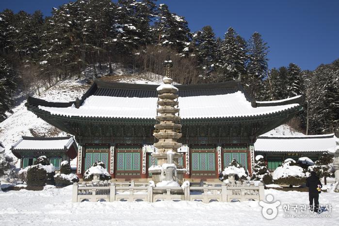 月精寺&月精寺杉松林(월정사 전나무숲)31