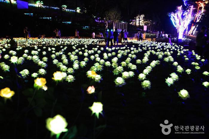 산속여우빛축제 사진