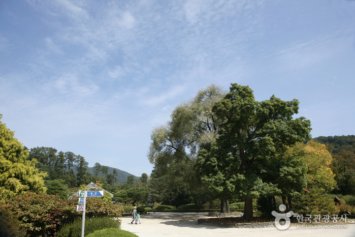 Korea National Arboretum and Forest Museum (Gwangneung Forest) (국립수목원 (광릉숲))