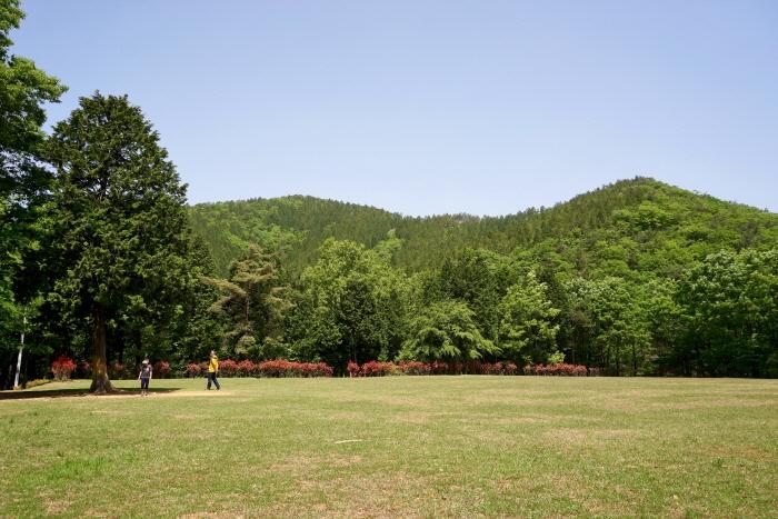 드넓은 잔디마당은 남해편백자연휴양림의 자랑이다.