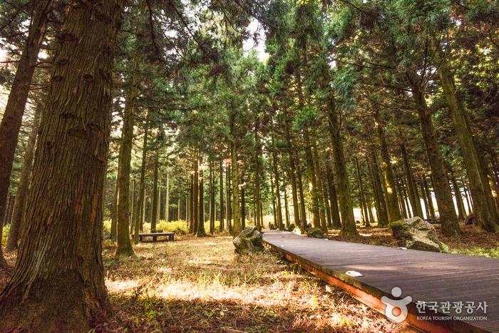 Лесная дорожка Сарёни (사려니숲길)2