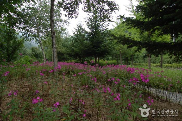 가리산자연휴양림