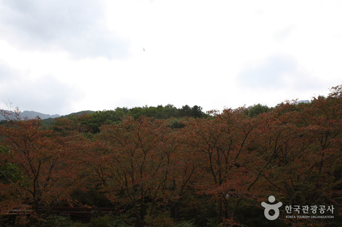 Parque Provincial de la Montaña Sinbulsan (신불산 군립공원)